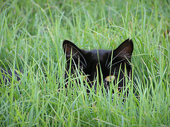 Hidden Cat (by Grahford)
